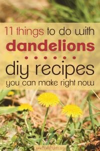 Dandelions outside on a sunny day with text overlay- things to do with dandelions DIY recipes you can make right now