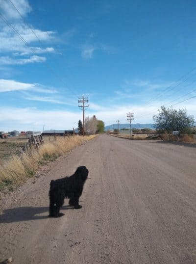 dog on a dirt road